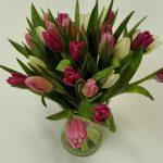 20 tulipánů - doručení květin Olomouc