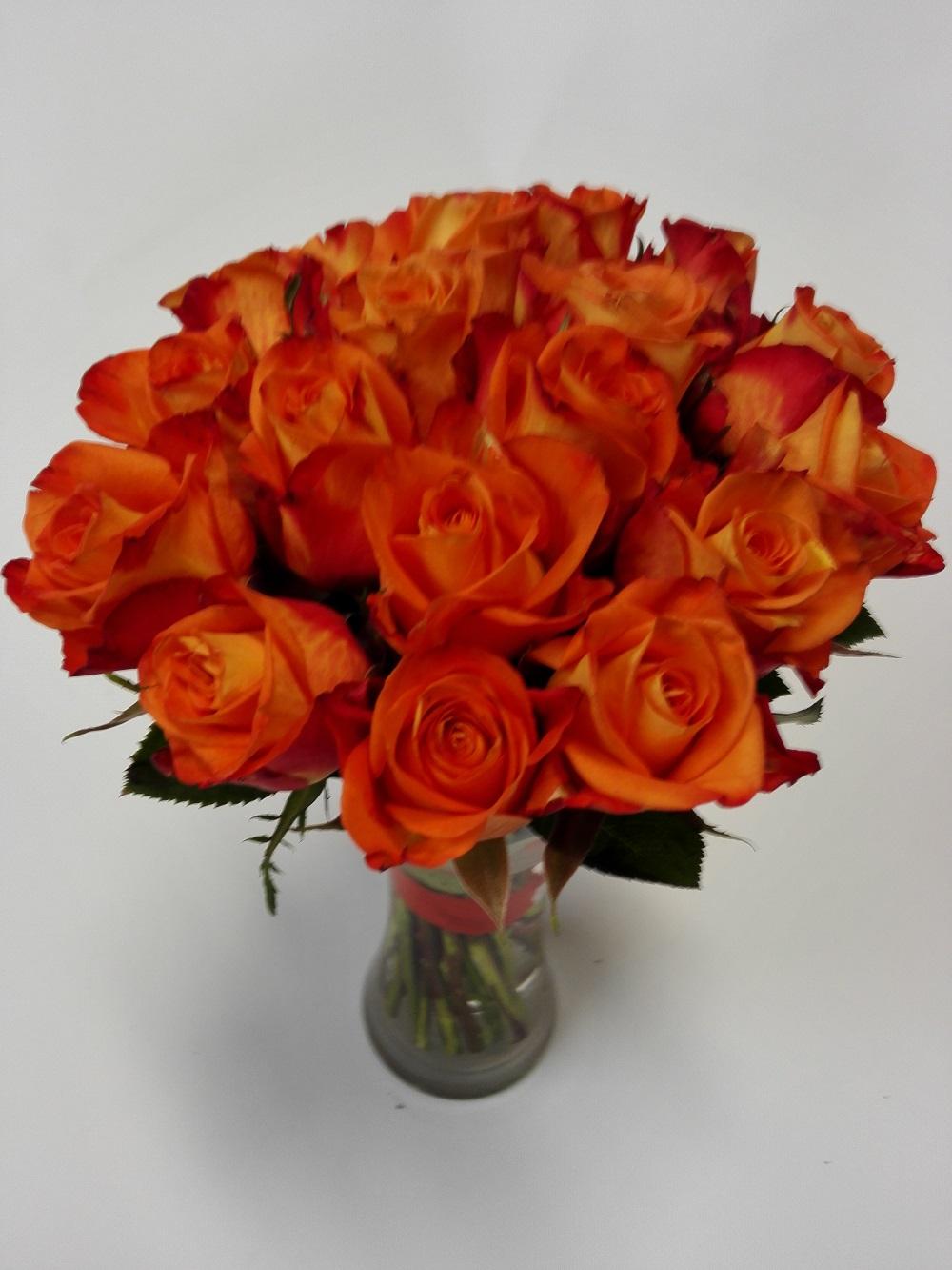růže oranžové 18 ks doručení květin Olomouc a okolí