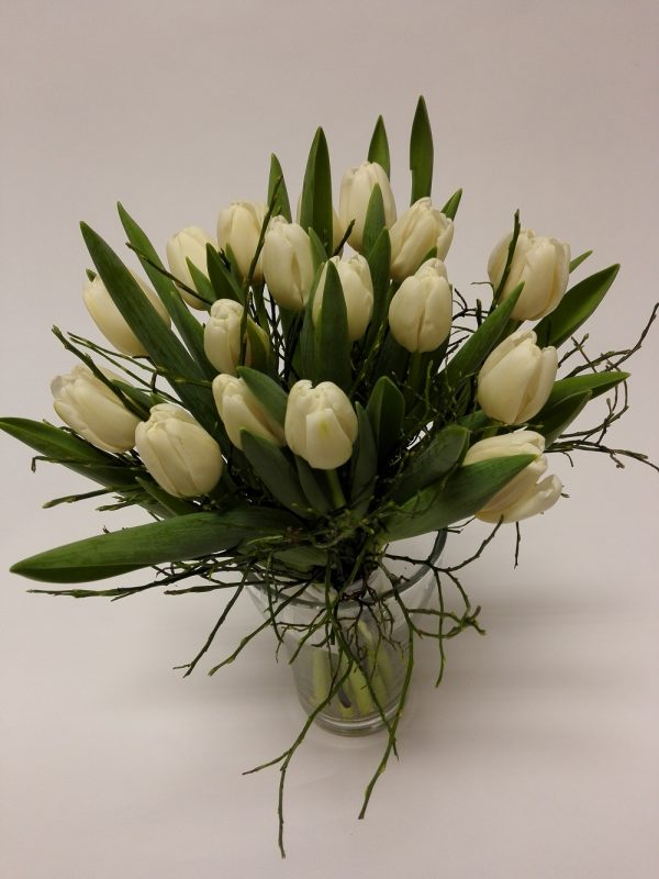 bílé tulipány – rozvoz květin Olomouc