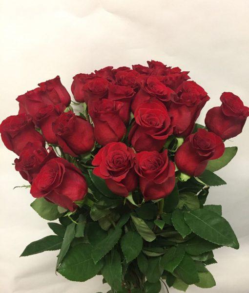 Rudé růže 30 ks – krátké – rozvoz květin Olomouc