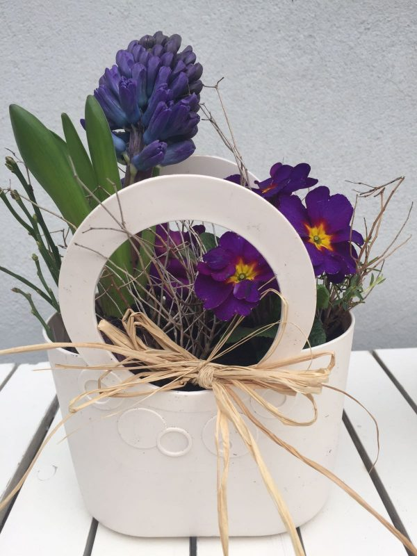 hyacint a primulka
