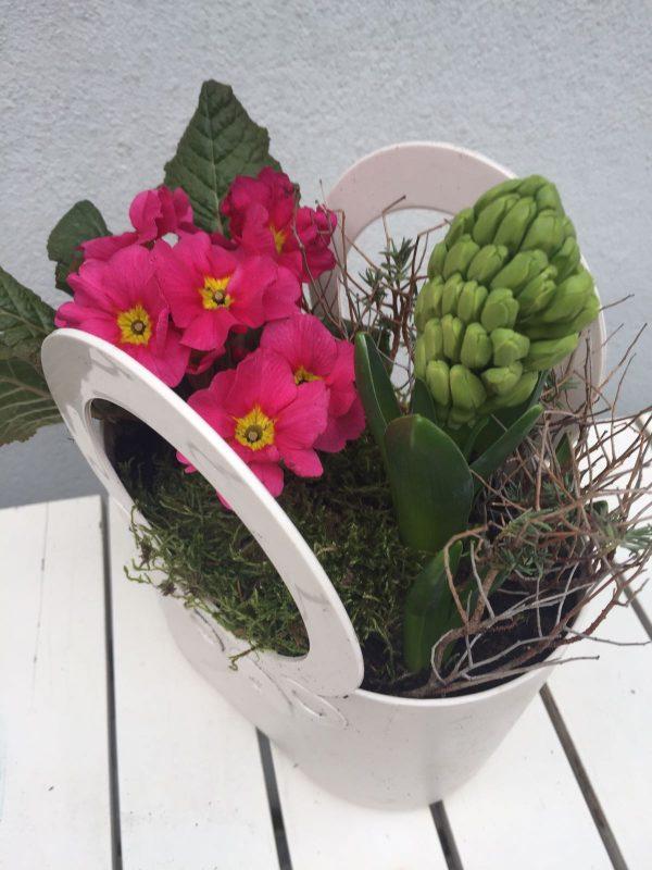 primulka a hyacint