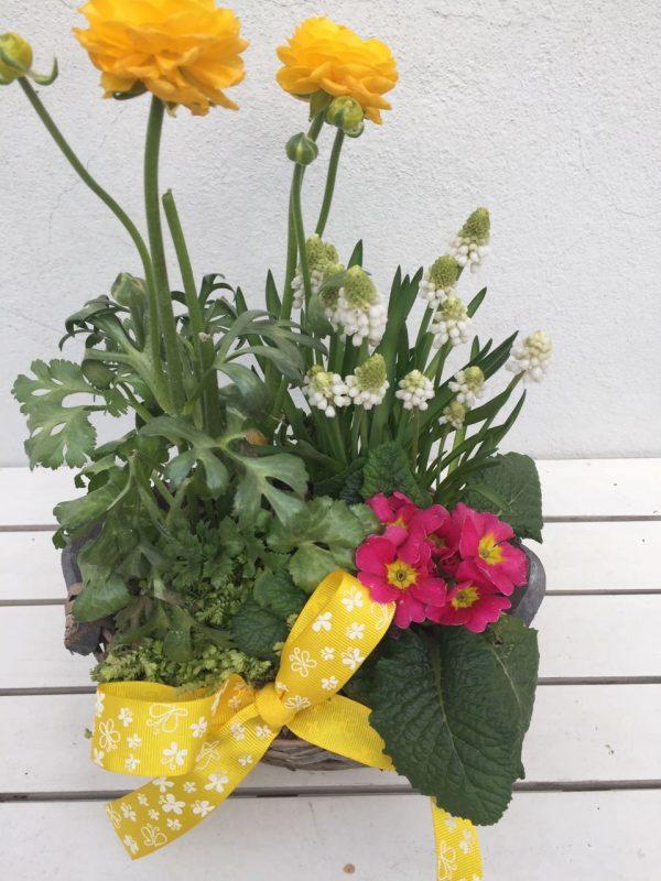 rozvoz květin olomouc
