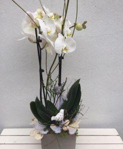 orchidej rozvoz květin olomouc