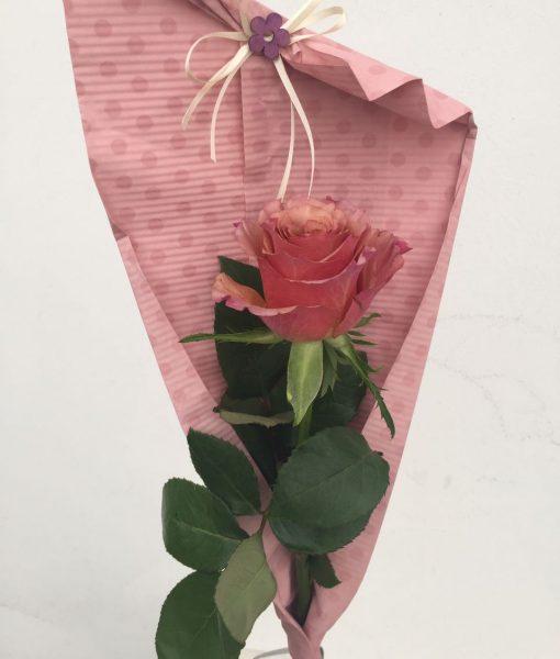 květiny olomouc růže