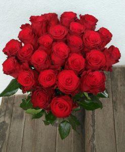 rudé růže olomouc