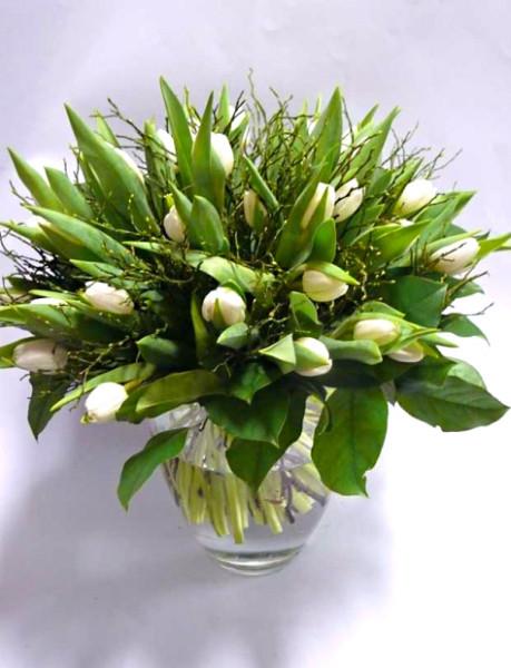 Kytice 25 bílých tulipánů – rozvoz květin Olomouc