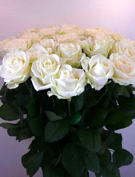 Kytice bílých růží odrůdy Avalanche 30 kusů